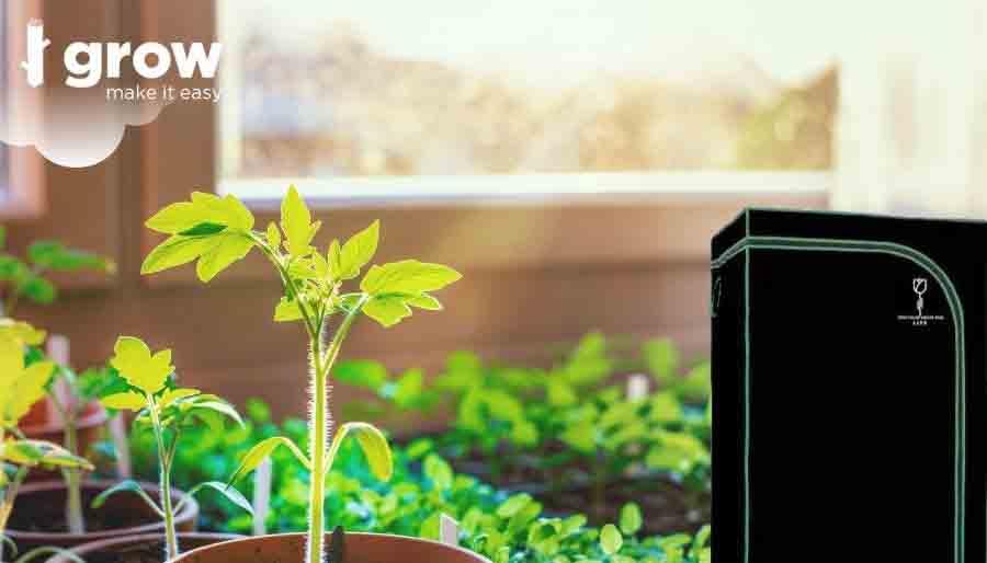 coltivare in casa con growbox